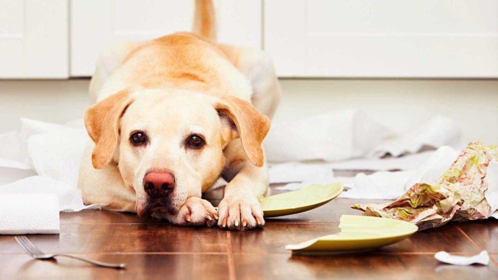 Какие собаки подходят для квартиры