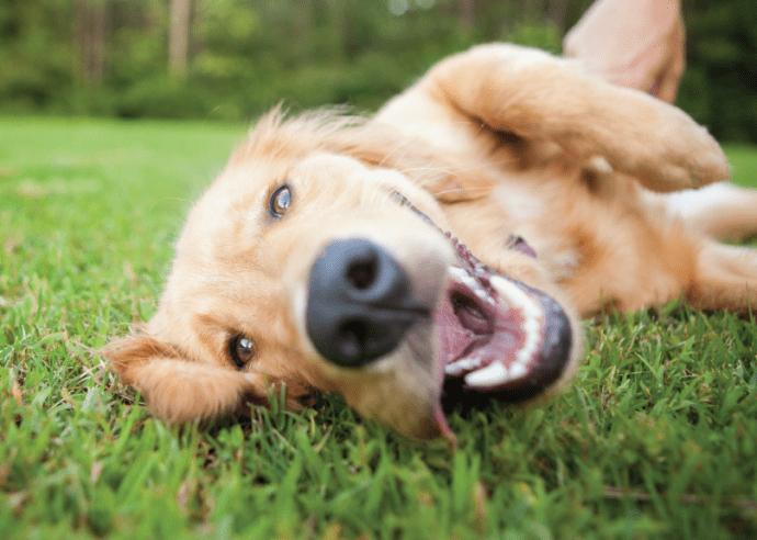 Дыхательная система собаки