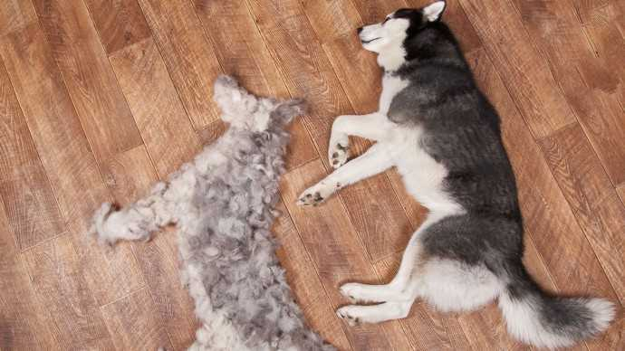 Кожа и шерсть собаки