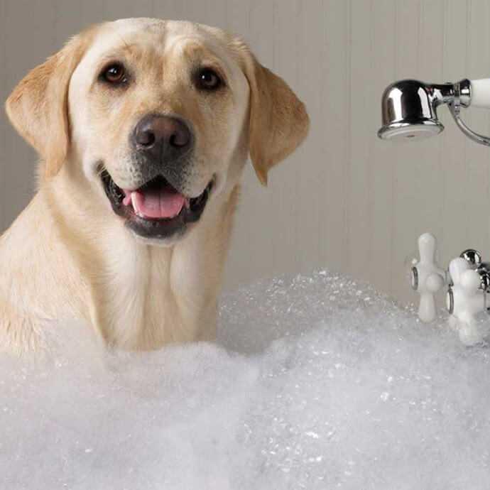 Как обработать собаку от клещей