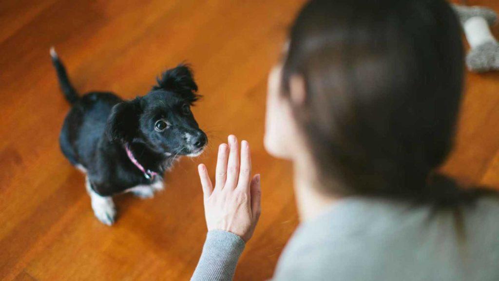 Дрессировка щенка, подготовительные упражнения