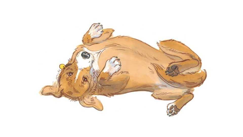 #0-1 Язык собак - учимся понимать хвостатого члена семьи