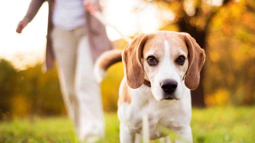 Как управлять поведением собаки