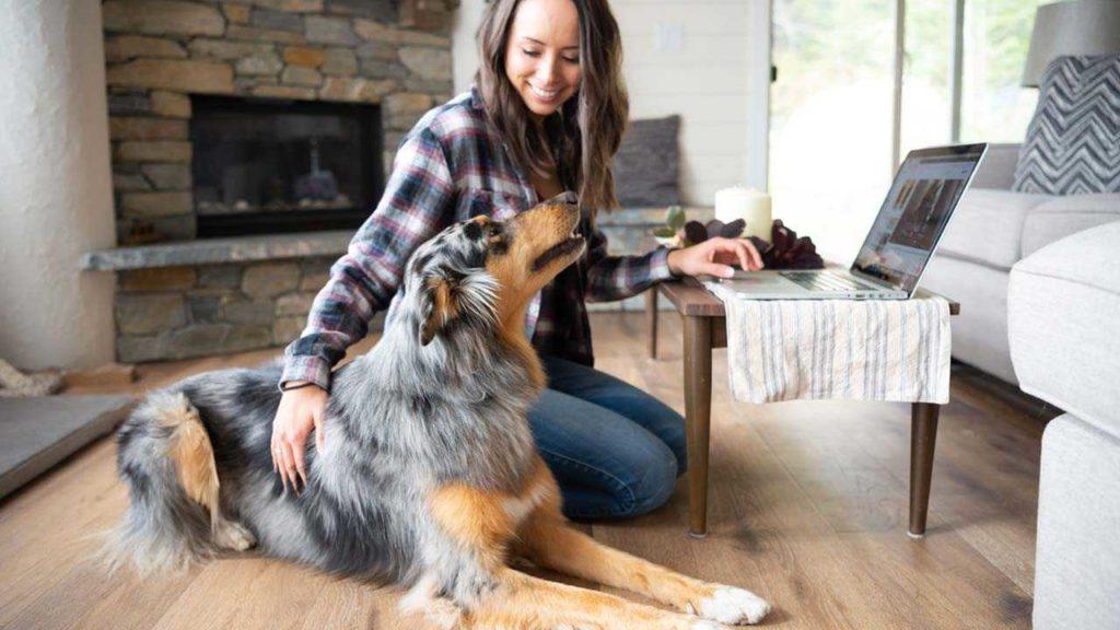 #0-3 Как управлять поведением собаки