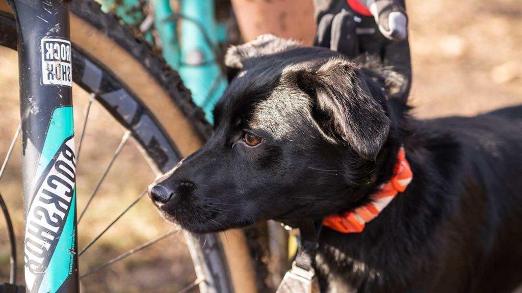 Что делать, если моя собака преследует других животных и людей (особенно велосипедистов)
