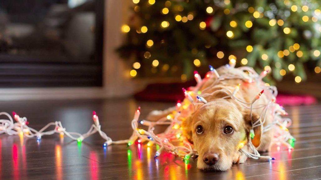 Как подготовить собаку к праздникам
