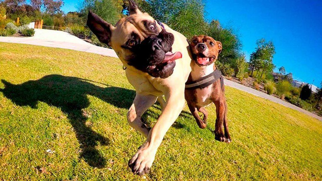 Как научить собаку эмоциональному самоконтролю