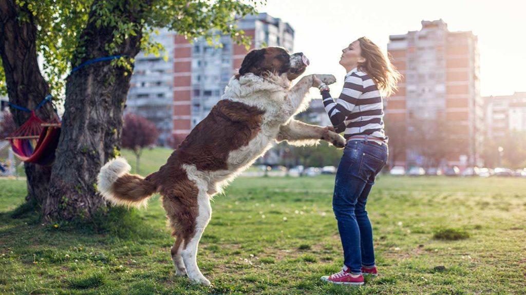Что делать, если моя собака наскакивает на людей