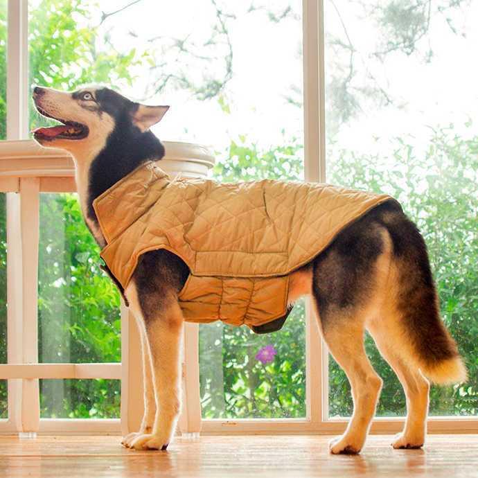 Нужно ли моей собаке зимнее пальто?