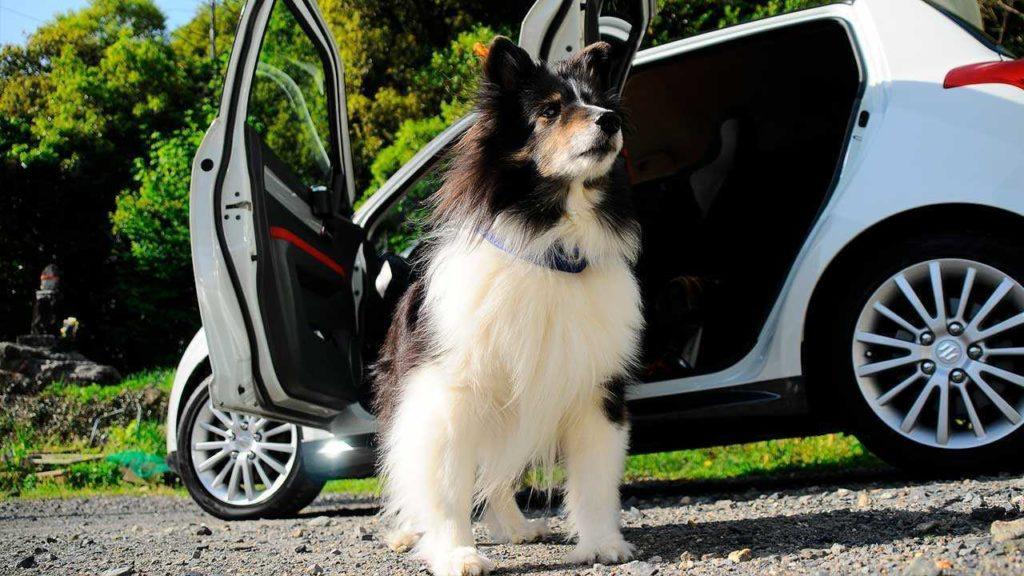 Что делать, если моя собака плохо переносит поездки в автомобиле