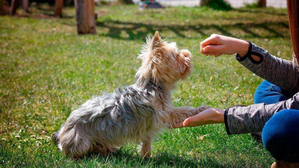 Что делать, если моя собака меня не слушается