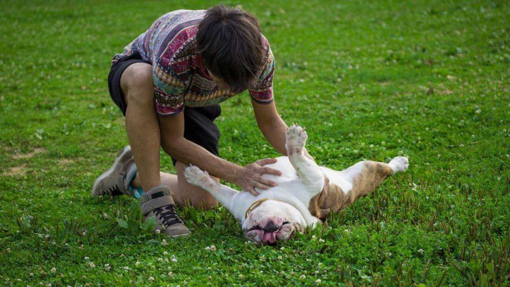 Что делать, если моя собака чрезмерно склонна к подчинению